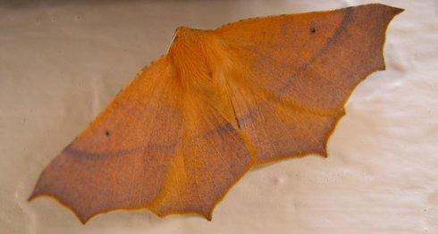 Moth at Hilari's, so pretty!